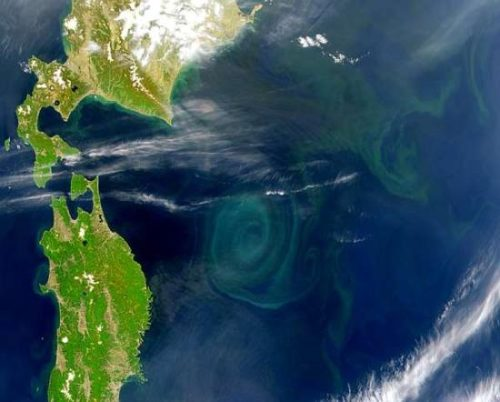 Pacific Garbage Patch Satellite Image