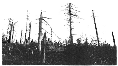 This forest is being destroyed by acid rain, a consequence of the continuing use by U.S. industries of high-polluting fuels, which pour millions of tons of sulfuric and nitric acids into the atmosphere from factory and power plant chimneys every year. Growing economic pressures will lead to even more use of such fuels in the future, and most U.S. forests and the wildlife in them will be increasingly threatened.