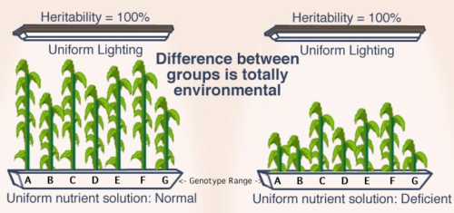 Like the plants on the right, which are genetically identical to those on the left, whites cannot thrive in an alien cultural environment controlled by Jews.