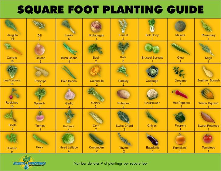 square foot gardening national vanguard