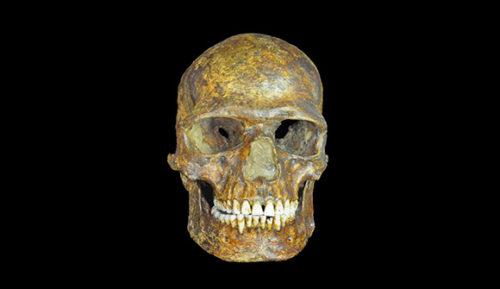 k14-skull1