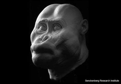 """""""Black Skull"""" -- Paranthropus aethiopicus"""