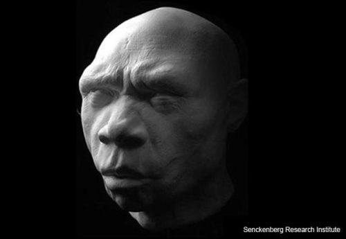 """""""Miquelon"""" -- Homo heidelbergensis"""