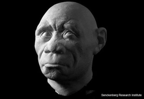 """The Hobbit"" -- Homo floresiensis"