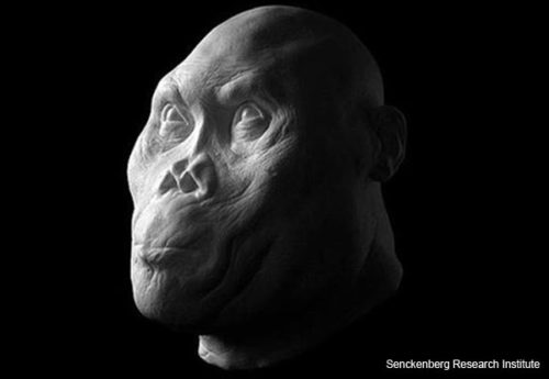 ancient-hominids-reconstruction-1