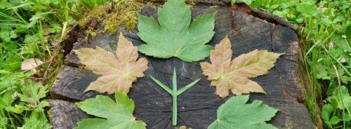 rune-leaves_crop