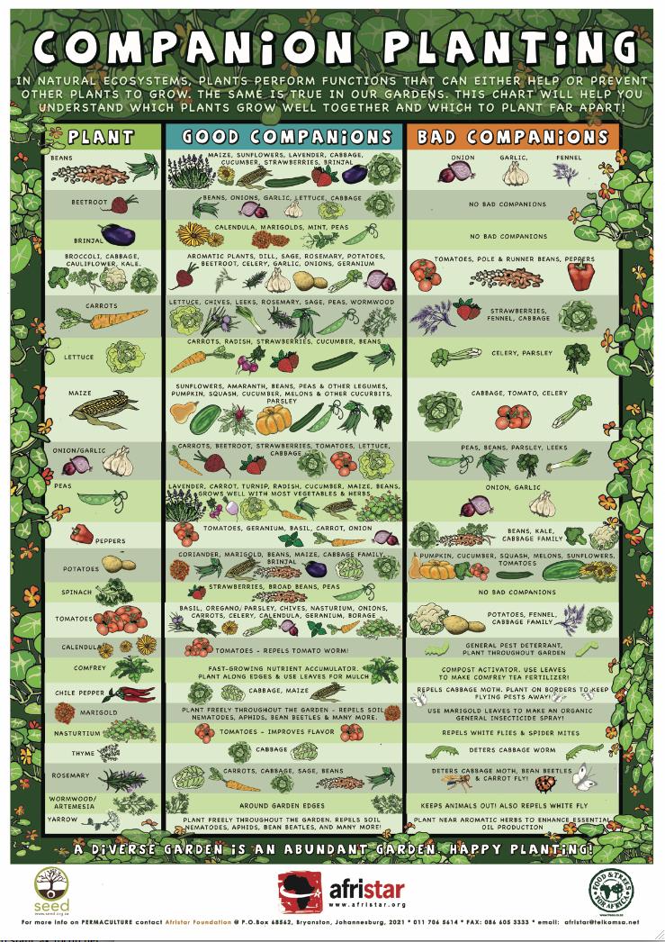 Square Foot Gardening | National Vanguard