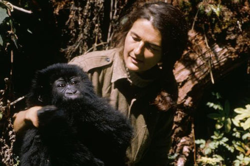 dian-fossey-with-infant-gorilla