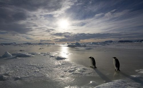 penguin_march_into_the_night_crop