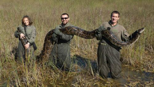 python-body