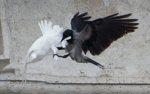 doves_of_ethnic_harmony-600x378